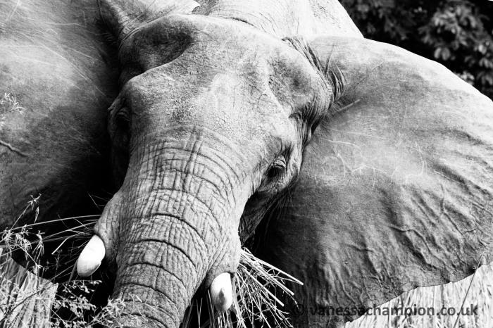 Elephants, anti-poaching, Uganda, The Nile