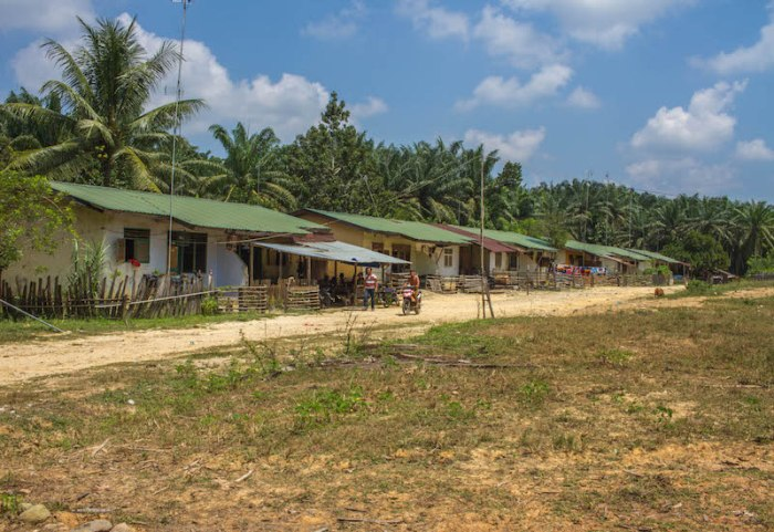 Palm Oil Plantation Homes
